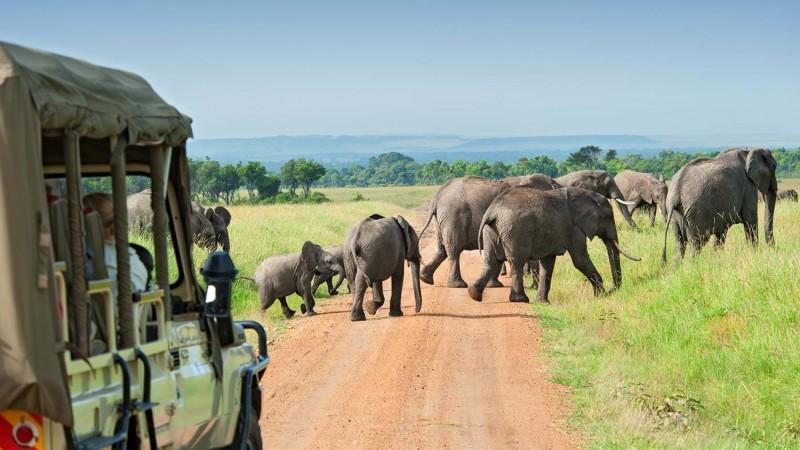 Miniguide: 4 råd til dig der skal på safari